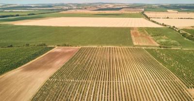 Agricultura sustentável: a sustentabilidade como estratégia competitiva