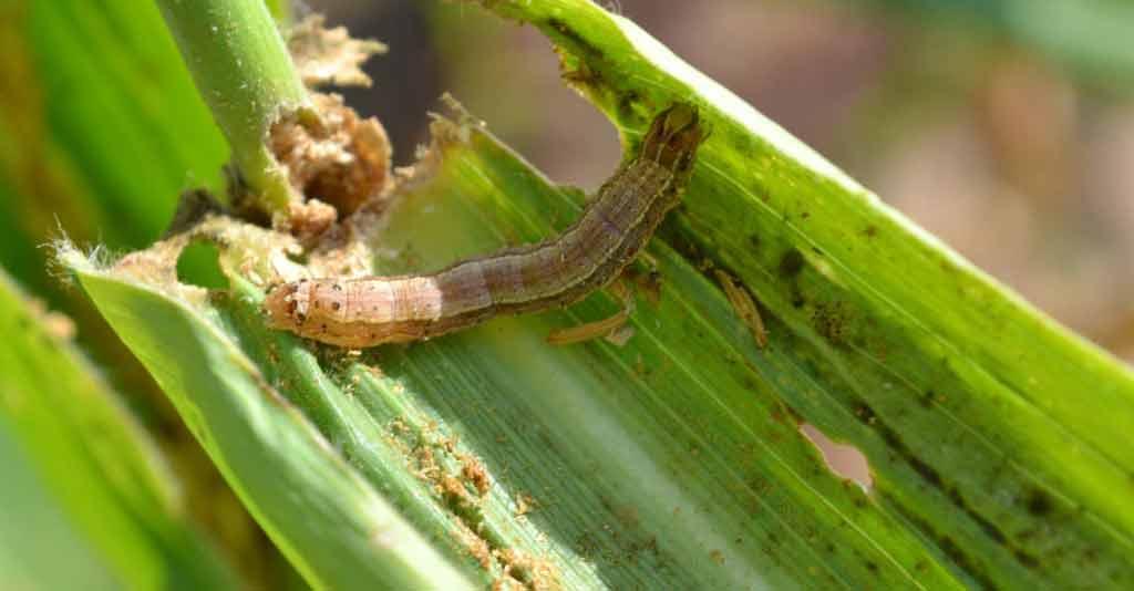 Principais alternativas para o controle de pragas agrícolas