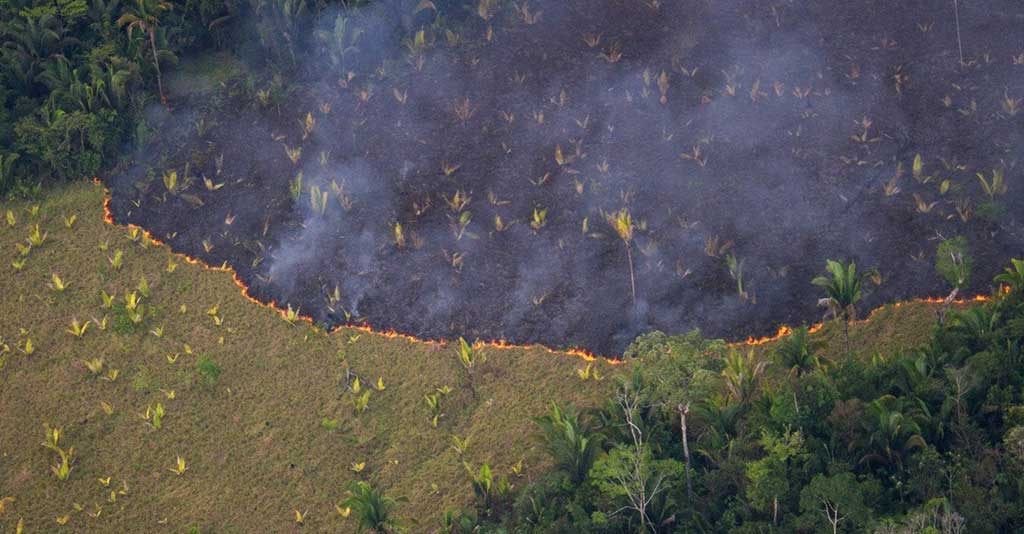 Desmatamento no Brasil: mitos e verdades