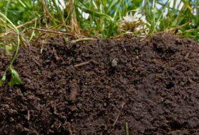 Fertilidade do solo e os fatores de produção agrícola