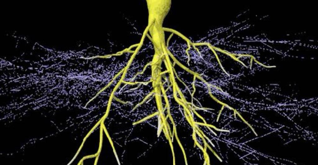 Como as micorrizas auxiliam na nutrição de plantas cultivadas