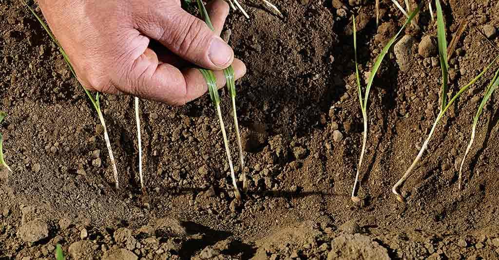 Poluição do solo / Contaminação do solo